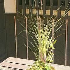 小鉢/盆栽/盆栽園 今日出かけた公園内にある盆栽園です🤗 盆…(8枚目)