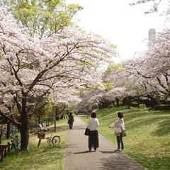 4月1日/ケーキ/アイスクリーム/満開/サクラ/桜 今日から4月(๑˙o˙๑)あっという間に…(1枚目)