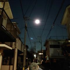 満月/お気に入り/日向ぼっこ/散歩/ハル/コラボ 今夜は満月🌕 昨夜makoさんのupを見…