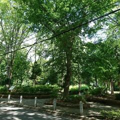 オアシス/木々/神社/公園 今日朝からも気温が高く💦  🚲💨で出かけ…