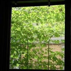 秋風/窓/ゴーヤ 部屋の中から外を眺める 🍁秋の気配、そろ…