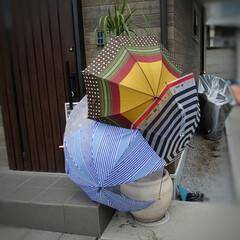 ホッコリ/芸術/干す/パラソル/傘 雨降りの後のこんな風景☂️☂️☂️ ご近…