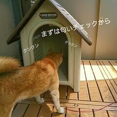 犬小屋/新居/小屋/犬/柴犬 もみじ家を買う(昔、こんな番組あったよう…(3枚目)