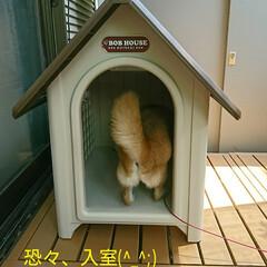 犬小屋/新居/小屋/犬/柴犬 もみじ家を買う(昔、こんな番組あったよう…(5枚目)