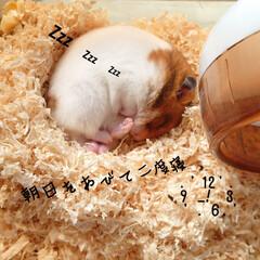 福クン/二度寝/催促/朝ごはん/ルーティン/リンゴ/... ꒉ:)و ̑̑オハヨウゴザイマス♪ …(1枚目)
