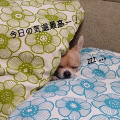 片付け/家の衣替え/おやつ/捻る おはようございます🍁 今日は東京最高気温…(2枚目)
