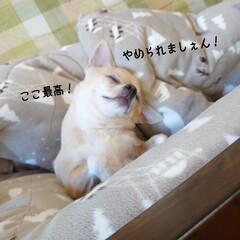 爆睡/こたつ/ハル/スイーツ?/折々 (。・ω・。)ノ<おはようございまーす!…