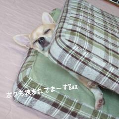 白あん/小豆あん/大判焼き/今川焼き おはようございます(*´˘`*) 昨日ご…(4枚目)
