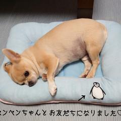 ベッド/お友だち?/🍘/ハルくん/福くん/ご褒美/... おはようございます🔆🔅 只今の🌡29℃(…(1枚目)