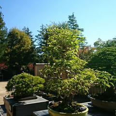 小鉢/盆栽/盆栽園 今日出かけた公園内にある盆栽園です🤗 盆…(7枚目)