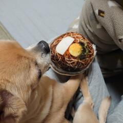 犬/ドライブ/お出かけ/古巣/オモチャ/お買い物/... 前日の❄みぞれからの暖かい日曜日 ハルを…