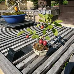 小鉢/盆栽/盆栽園 今日出かけた公園内にある盆栽園です🤗 盆…(4枚目)