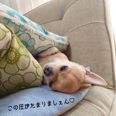 おうち時間/手縫い/雑巾/ハル/8月6日/広島平和記念式典 おはようございます🎐 気温が高すぎて買い…(2枚目)