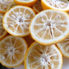 柚子/手作り/ジャム/おすそ分け おはようございます 先日友達からたくさん…