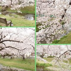花見/桜/カフェ こんばんは🌙今日は予報どおりの曇り空そし…(5枚目)