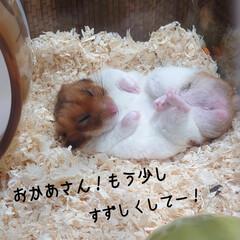 ベッド/お友だち?/🍘/ハルくん/福くん/ご褒美/... おはようございます🔆🔅 只今の🌡29℃(…(2枚目)