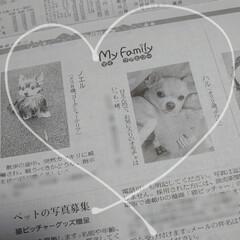 犬/ハルくん/記念品/掲載/新聞 |ョ^ω^)おはようございます 先日ハル…