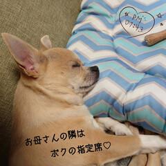 マスクケース/クリアケース/ハルの指定席/リミ友アイデア 昨日nagomiさんがアイデアでupして…(7枚目)