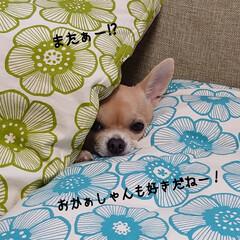 片付け/家の衣替え/おやつ/捻る おはようございます🍁 今日は東京最高気温…(3枚目)