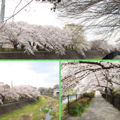 花見/桜/カフェ こんばんは🌙今日は予報どおりの曇り空そし…(8枚目)