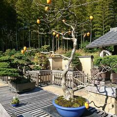 小鉢/盆栽/盆栽園 今日出かけた公園内にある盆栽園です🤗 盆…(3枚目)