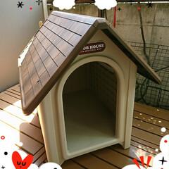 新居/犬小屋 お待たせしました🎶 答えは、もみじの新居…