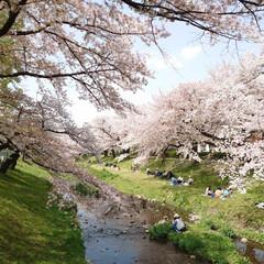 4月1日/ケーキ/アイスクリーム/満開/サクラ/桜 今日から4月(๑˙o˙๑)あっという間に…(2枚目)
