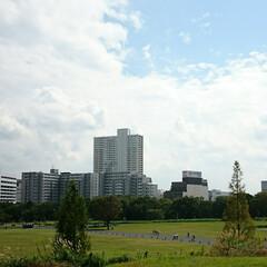 小さな芽/桜/駅周辺/高層ビル/庭/秋の空/... 先日 近所の公園で桜の木が老木で幹が空洞…(5枚目)