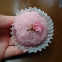 春スイーツ/桜餅/あんこ/こし餡 セブンの春のスイーツ桜もち ひと足早い春…