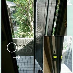 快適/網戸/玄関 🎉玄関網戸、先日なんとか設置完了しました…