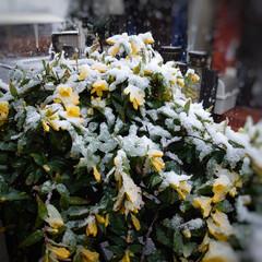 雪/季節外れ おはようございます🌨 こちら東京の空は雪…