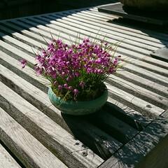 小鉢/盆栽/盆栽園 今日出かけた公園内にある盆栽園です🤗 盆…(2枚目)