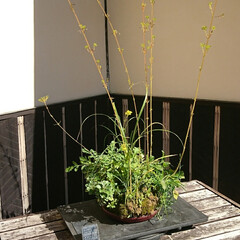 小鉢/盆栽/盆栽園 今日出かけた公園内にある盆栽園です🤗 盆…(9枚目)