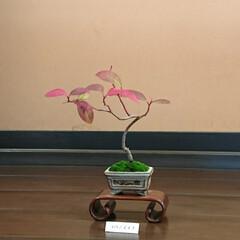 盆栽の世界/小さな盆栽/盆栽/日本庭園 暖かい陽に誘われて🚲💨にて いつもの公園…