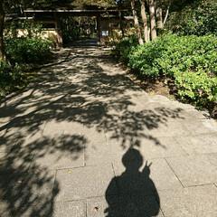足元/紅葉/日本庭園/いつもの公園 いつもの公園 日本庭園内の足元にも秋🍁を…