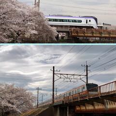 花見/桜/カフェ こんばんは🌙今日は予報どおりの曇り空そし…(7枚目)
