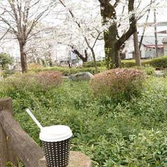 花見/桜/カフェ こんばんは🌙今日は予報どおりの曇り空そし…(9枚目)