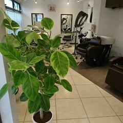 植木/美容室 お世話になっている✂️美容室 以前の植木…