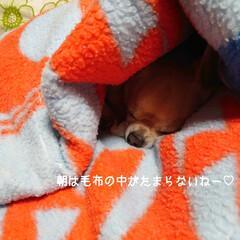 ハル/毛布/新米/プリザ/リサイクル/片付け おはようございます🍁 めっきり秋らしく朝…(3枚目)