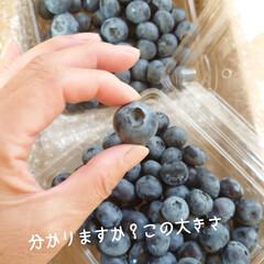 リミ友/贈り物/ブルーベリー/カップケーキ/父の日 こんばんは(*´▽`*)ノ 夕方ピンポー…