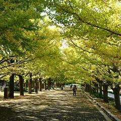 パスポート/紅葉/小枝アート?/イチョウ並木/いつもの公園/秋の一枚 いつもの公園へ🚲💨本日また行って来ました…