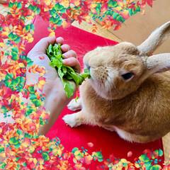 ウサギ/大根間引き/食欲の秋 大根や水菜の間引きしたのをめっちゃ喜んで…