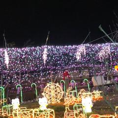 大任/道の駅/イルミネーション/クリスマス/クリスマスツリー/おでかけ 昨日は、イルミネーションを見に✨福岡県に…(9枚目)