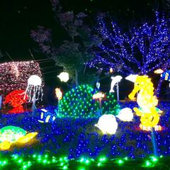 大任/道の駅/イルミネーション/クリスマス/クリスマスツリー/おでかけ 昨日は、イルミネーションを見に✨福岡県に…(4枚目)