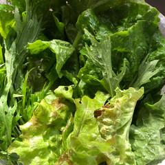 家庭菜園/BBQ/おうちごはん 摘みたて野菜😊 今日は娘と息子の友達が集…