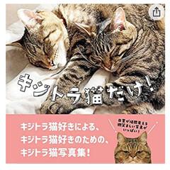 どうぞ宜しくお願いしますにゃん🐱/キジトラ猫だけ!/キジトラ/写真集/ねこ 🐱『お父さんからお知らせだにゃん』 つい…