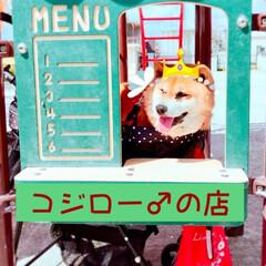 コジロー♂の店🐕開店しました❤️/大切なこどもです🐕/ワンワンカート🐕/コジロー♂🐕/夢みる15歳🐕/柴犬🐕/... コジロー♂の店❤️