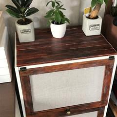 鉢/セメント/カラーボックス/DIY/雑貨/100均/... 100均のセメントで作った鉢とカラーボッ…