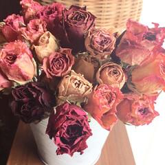 ドライフラワー/薔薇/雑貨/ハンドメイド/住まい/暮らし/... 大好きな薔薇のドライです。 普段は陽のあ…