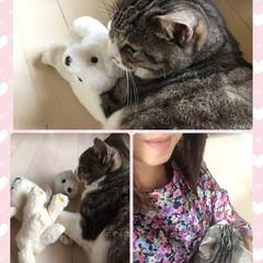 愛猫/猫/ペットとの暮らし ニアが娘の部屋から小さなぬいぐるみをくわ…